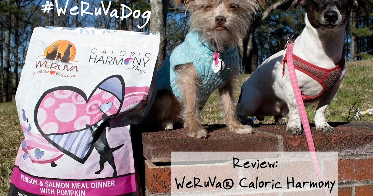 Review Weruva 174 Caloric Harmony Dog Food Weruvadog The