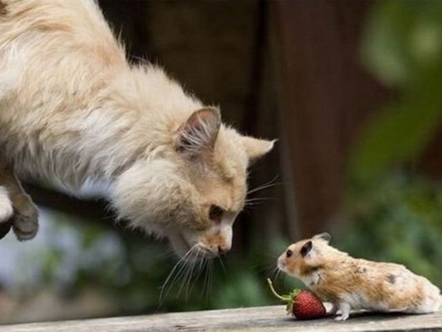 Zoo Animals: Funny Cat And Mouse Pictures
