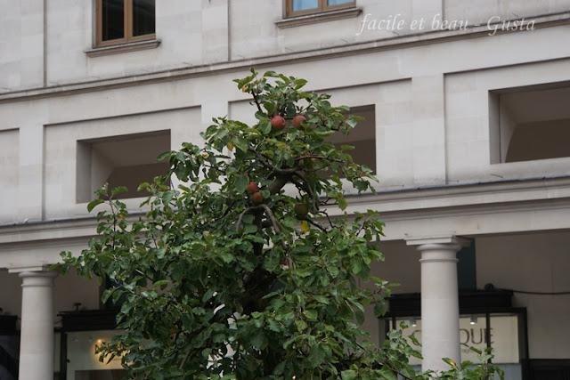 Apelbaum im Kübel