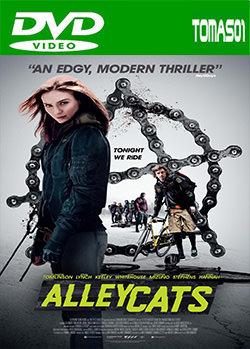 Alleycats (2016) DVDRip
