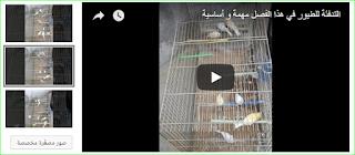 التدفئة للطيور