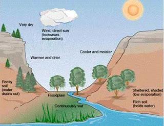 Macam-macam Komponen Abiotik dalam Ekosistem