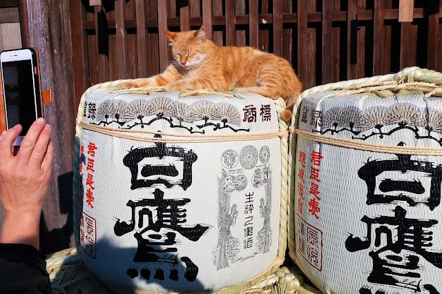 伊勢 おかげ横丁 おかげ猫 ネコ
