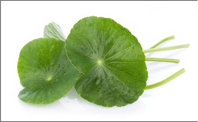 What is Centella Asiatica for