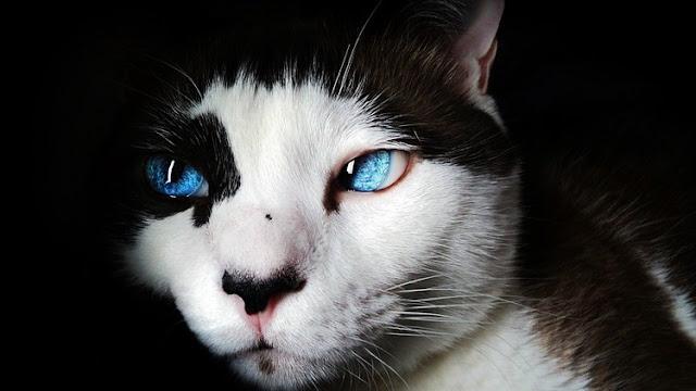 No hay gato encerrado: Muere la primera persona mordida por un minino