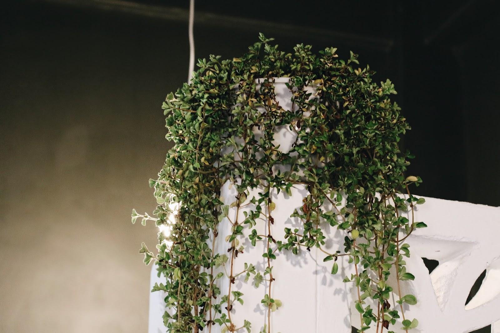curiocity durban review, copper garden