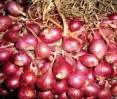 Keunggulan Bawang Merah Varietas Bima Brebes