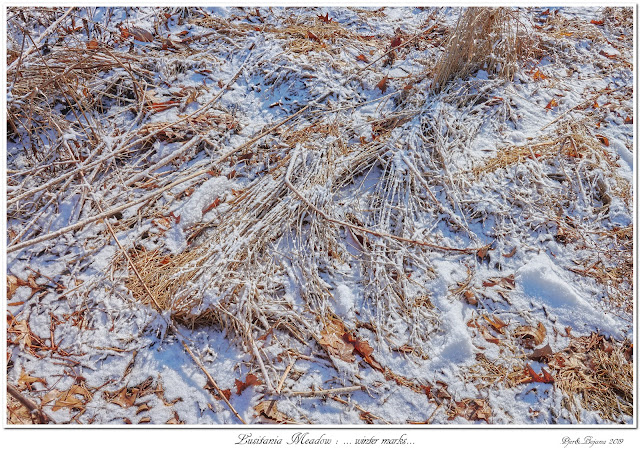Lusitania Meadow: ... winter marks...