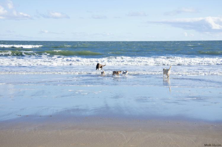 Travel Diary: Places to Visit in Scarborough - North Bay Beach