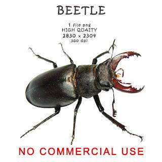 https://4.bp.blogspot.com/-pane4tvsomE/WYww8x7_eWI/AAAAAAAAC-g/m6yiH7_v7AEpS8IfbC-Qqn19bPuB8dhYACLcBGAs/s320/beetle.jpg