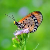 Bir çiçek üzerindeki kelebek