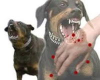 Antisipasi Serangan Rabies, Dinas Pertanian Kobi Bergerak Cepat