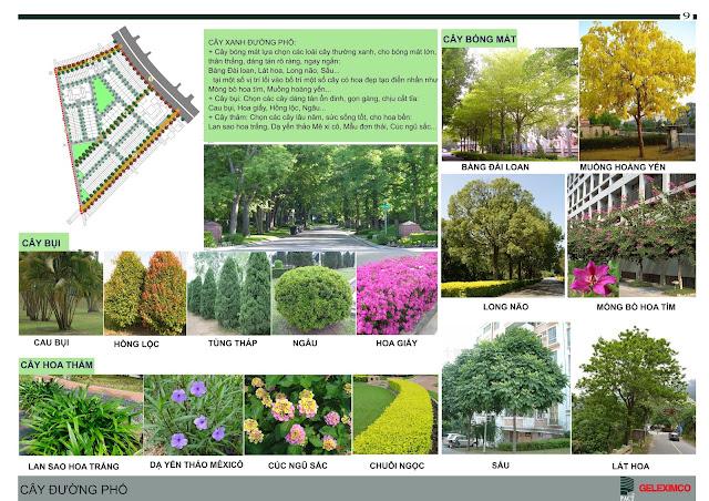 Cây xanh đường phố tại The Green Daisy