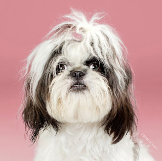 Green Pear Diaries, fotografía, Grace Chon, Hairy, Peludos, mascotas
