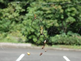 自然観察会「クモって益虫なんだよ」
