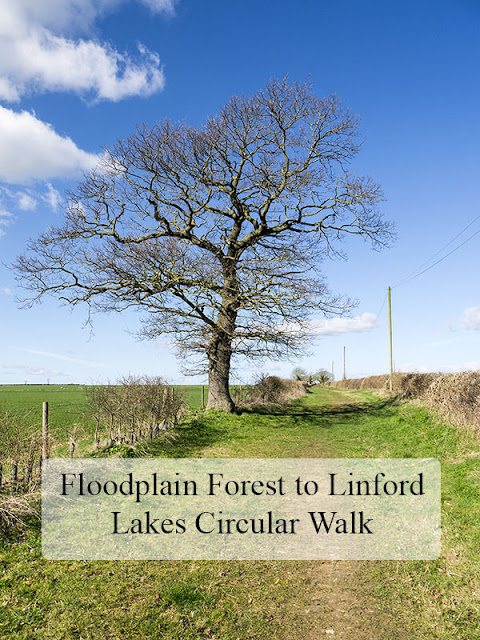 Floodplain Forest to Linford Lakes Circular Walk