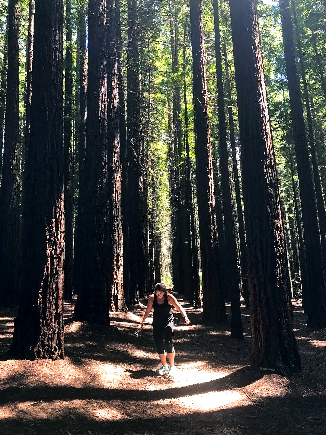 My Solo Travel Guide to Melbourne Redwood Forest