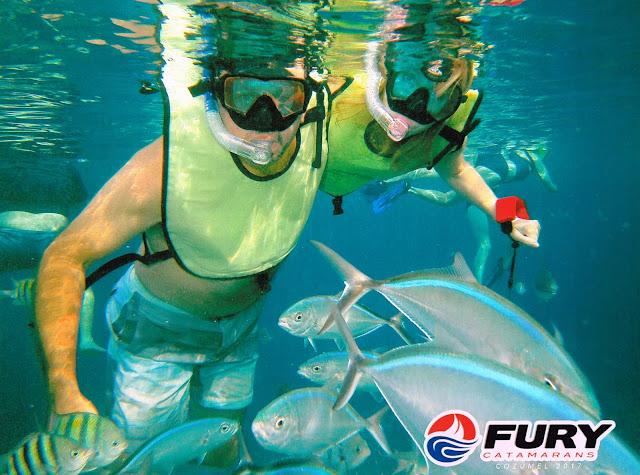 Fury Snorkeling