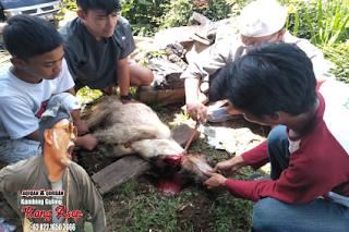 catering aqiqah dn kambing guling