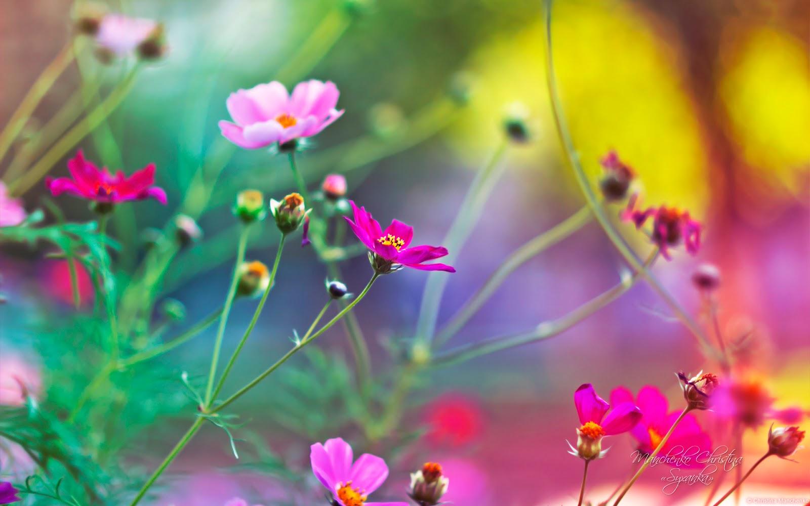 Amazing World: Beautiful nature and flowers wallpaper ...