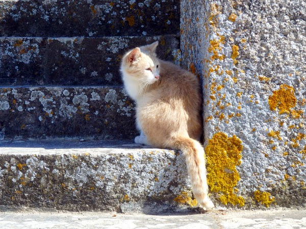 ginger cat on stairs