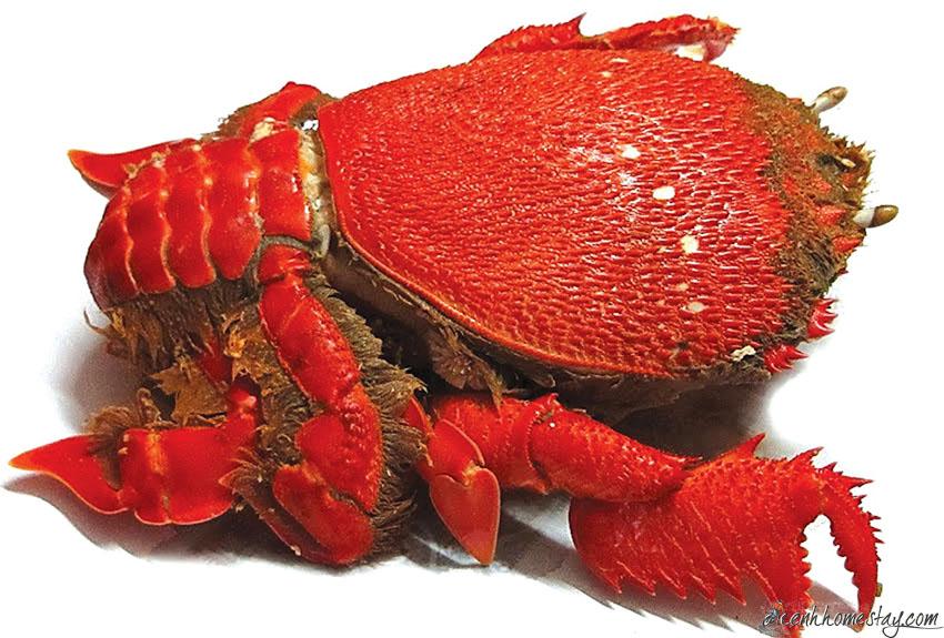 Top 20 quán ăn ngon Nha Trang nổi tiếng nhất định phải thưởng thức