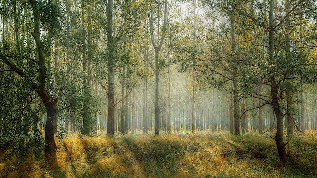 Perbedaan Pohon, Semak dan Perdu dalam Arsitektur Lanskap