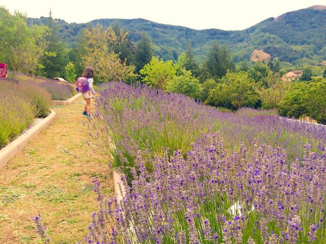 Parco della Lavanda nel Parco del Pollino