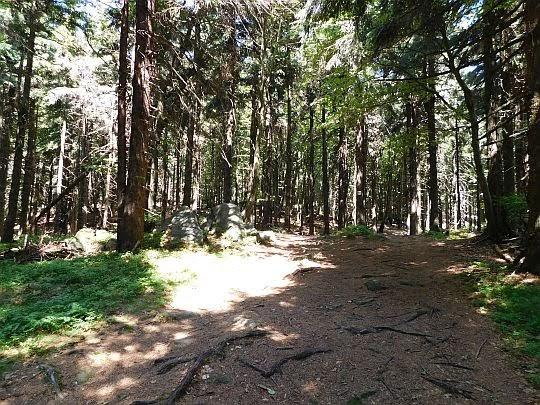 Bór świerkowy na stokach góry Żmij.