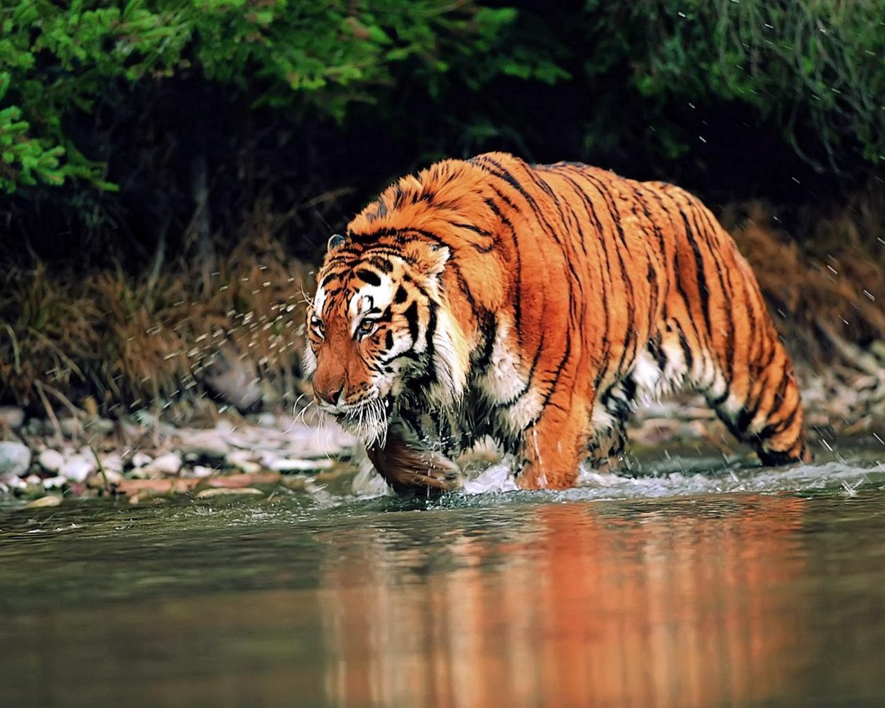 Jungle Love Sexy Video Hd