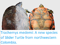 https://sciencythoughts.blogspot.com/2017/12/trachemys-medemi-new-species-of-slider.html