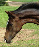 http://www.pferdezucht-franz.com/2010/06/hohenstern-stutfohlen-von-hohenstein.html