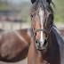 Zender van de maand bij Kabel Noord: Horse and Country TV