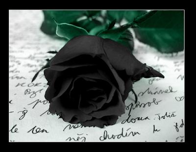 Μαύρο τριαντάφυλλο. Ακολουθεί το κείμενο: Ναι! Η απόλαυσή μου θέλει να ευχαριστήσει.  Κάθε απόλαυση θέλει να ευχαριστήσει.  Θέλετε να κόψετε τα ρόδα μου;   Πρέπει να σκύψετε και να χώσετε τις μύτες σας  μέσα στα βράχια και τους βάτους  και μη φοβάστε τις πληγές!   Γιατί η απόλαυσή μου αγαπάει τ' αστεία.  Γιατί η απόλαυσή μου αγαπάει τις πονηριές!  Θέλετε να κόψετε τα ρόδα μου;