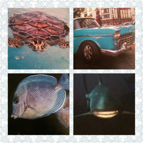 reef libre collage 1