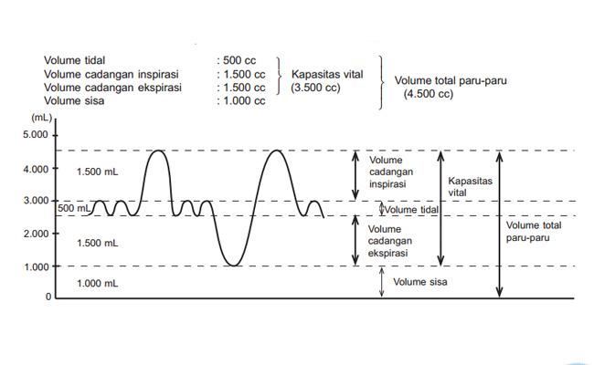 Volume Udara Pernapasan dalam Paru-paru