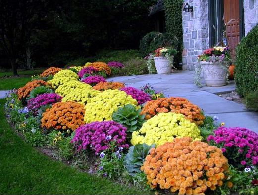 Co sadzić w ogrodzie aby jesienią był pełną paletą barw?