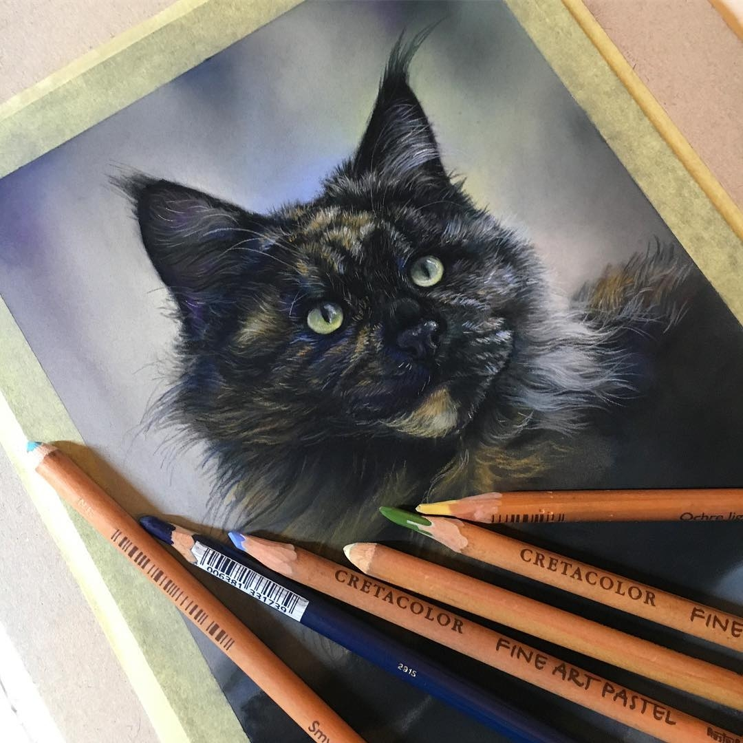 06-Black-Mainecoon-Cat-Tatjana-Bril-Domestic-and-Wild-Animal-Drawings-www-designstack-co