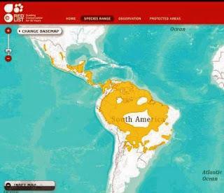 Mapa de Distribuição onça pintada, IUCN, Panthera onca, onça pintada, panthera, fotos onça pintada, extinção, felinos