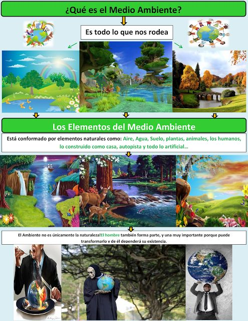 medio ambiente, definicion y significado