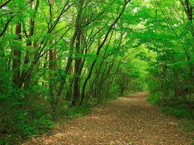 Aokigahara, hutan indah dari jepang yang mempunyai unsur mistis - Responsive Blogger Template