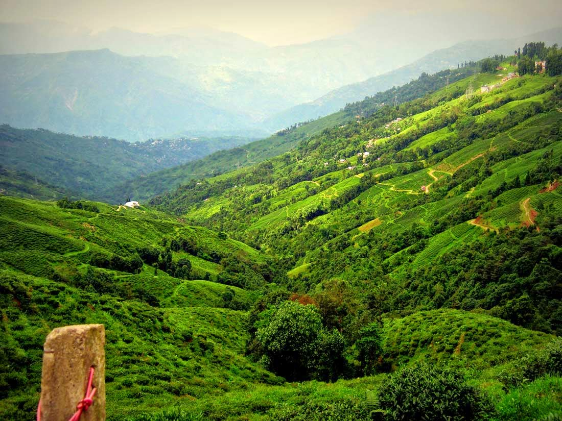 Natural Beauties of Darjeeling