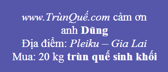 Trùn - Giun quế Pleiku - Gia Lai