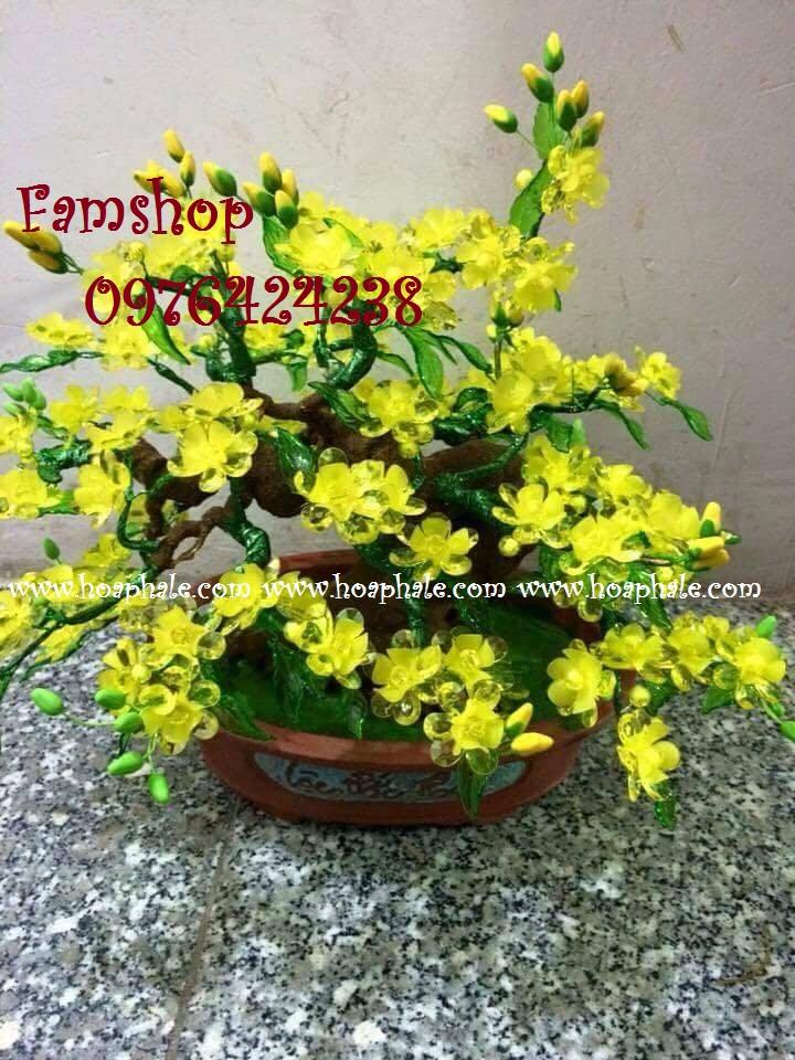 Goc bonsai cay hoa mai tai Tran Duy Hung