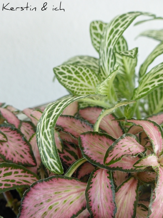 Nahaufnahme Pflanzen