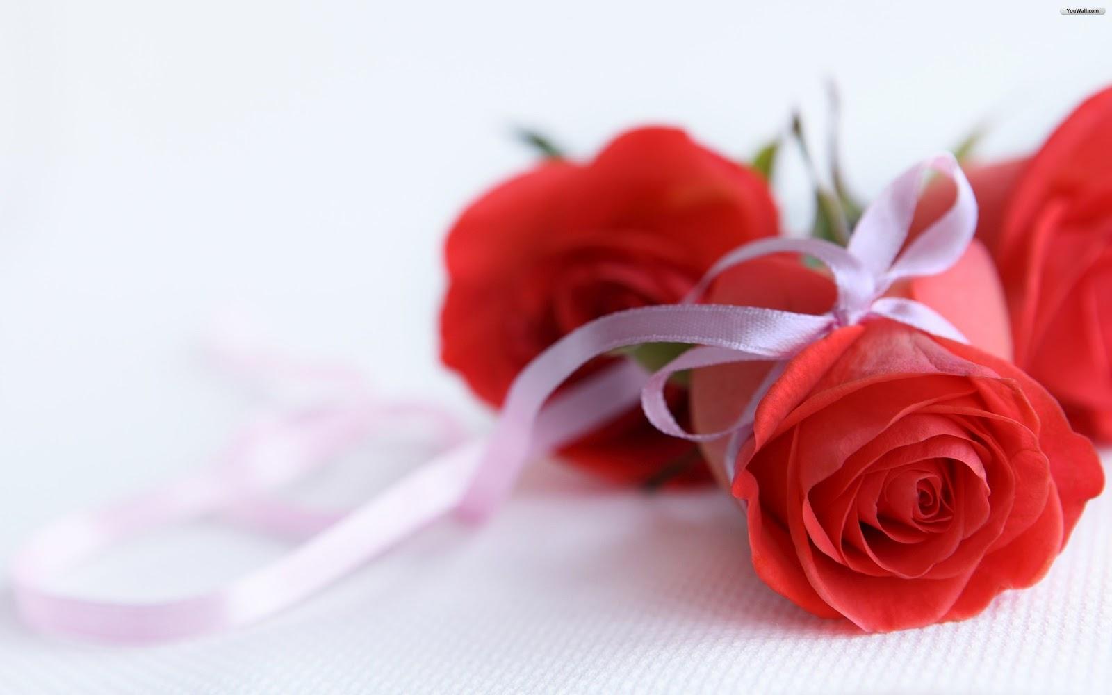 cute rose pictures. Black Bedroom Furniture Sets. Home Design Ideas