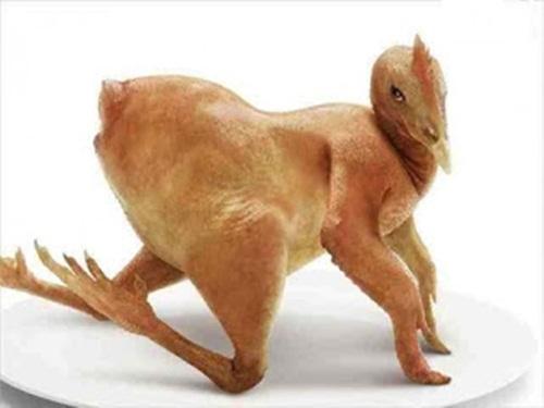 Info Penting !!! Makan 5 Bagian Ayam Ini Sama Seperti Menelan Racun. Mau Tahu Kenapa ?