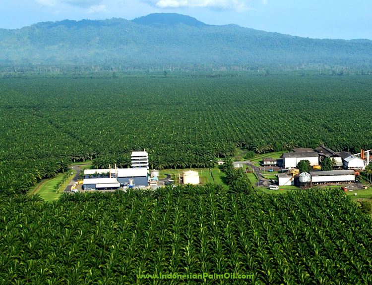 palm oil sustainably certified