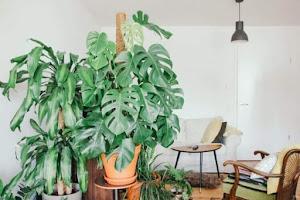 Tanaman Hias Indoor Terbaik dan Ide Kreatif Penanaman by Santrie Salafie