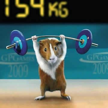 Cara Melatih Hamster Dalam Hal Fisiknya